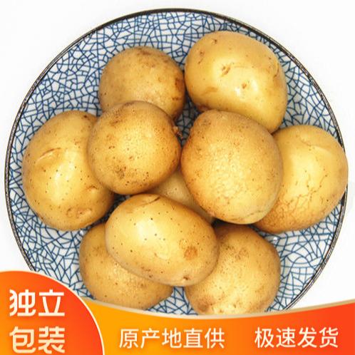 土豆新鲜黄皮黄白心土豆10斤农家自种蔬菜沙面马铃薯洋芋现挖包邮