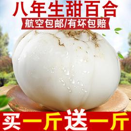 甘肃兰州百合新鲜百合500g纯食用天然生甜白合非干货特产特级包邮图片