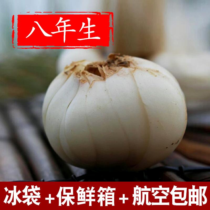 Авиации бесплатная доставка по китаю Ланьчжоу, Ганьсу новый Свежая лилия 500 г грамма натурального пищевого сырого сладкого белый Неспециальная лилия
