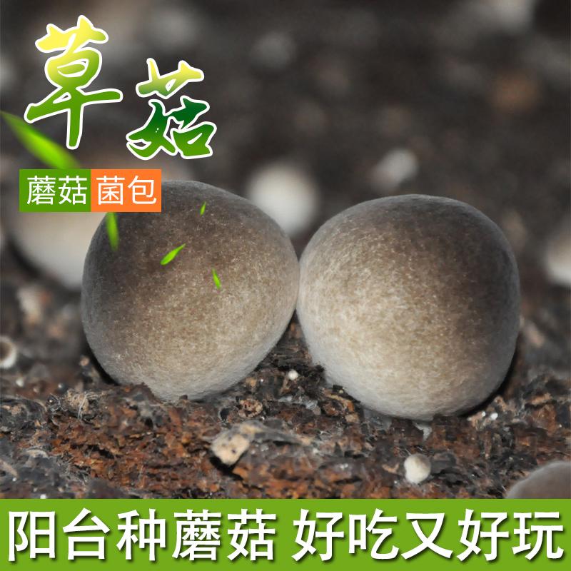 蘑菇种植包怎样好不好