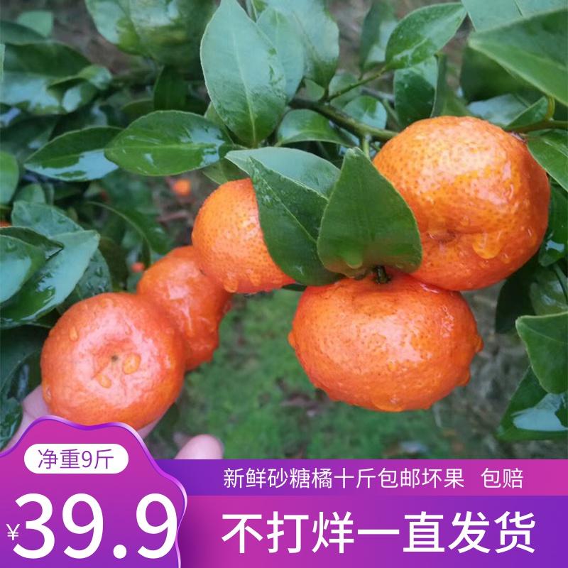 广西沙糖桔新鲜水果砂糖橘10斤带箱桔蜜桔薄皮砂糖桔橘子甜桔味甜