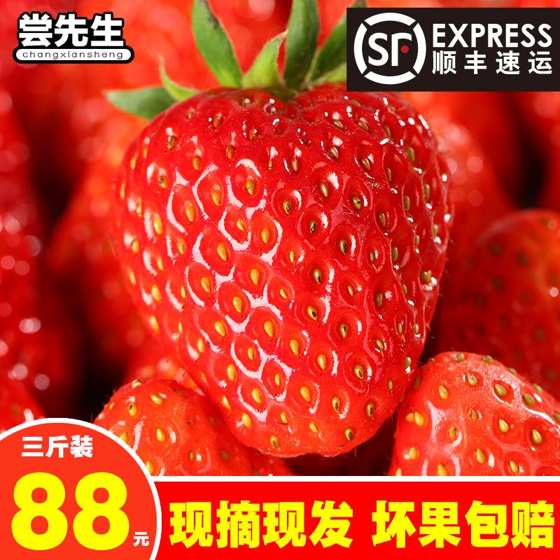 尝先生 现摘现发 红颜奶油草莓3斤