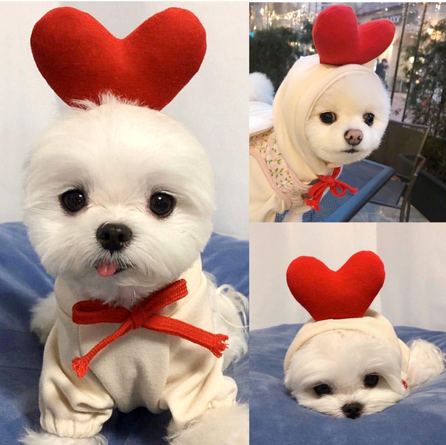 秋季新款宠物爱心卫衣小型犬泰迪比熊贵宾雪纳瑞猫咪狗狗秋冬衣服