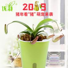 猪笼草食虫植物捕蝇草
