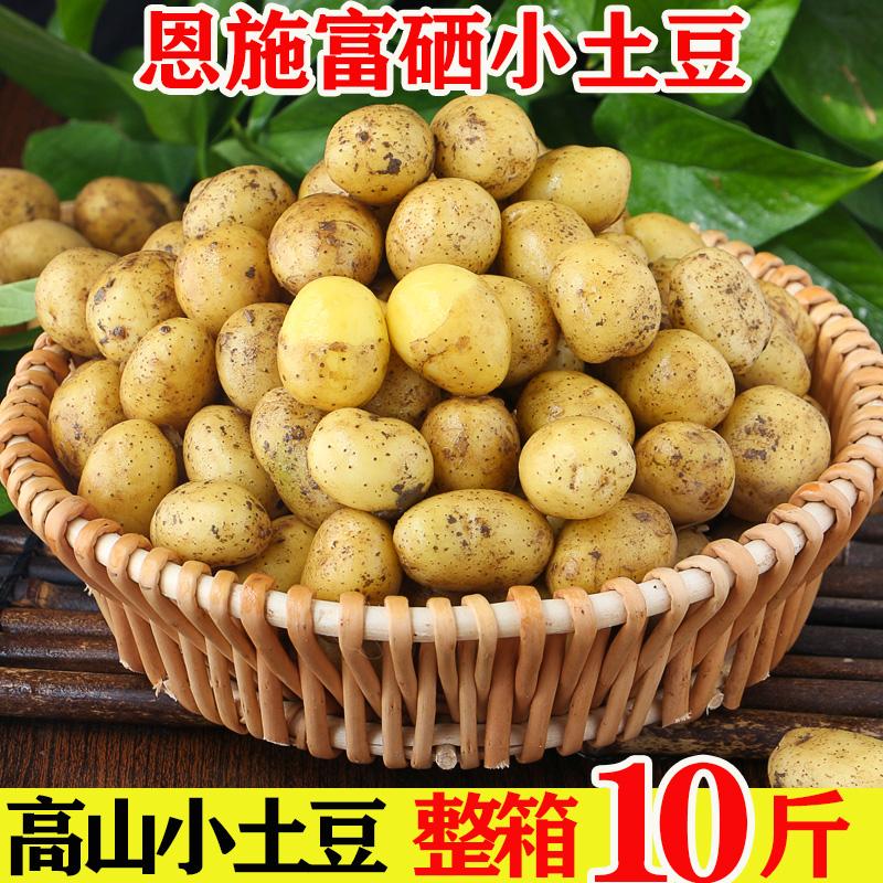恩施现挖新鲜土豆5斤包邮小土豆农产品黄心马铃薯大蔬菜洋芋10香
