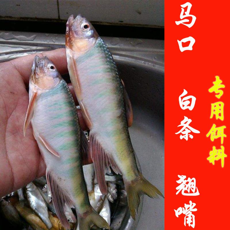 渔家傲白条鱼饵料马口饵野钓饵料(非品牌)