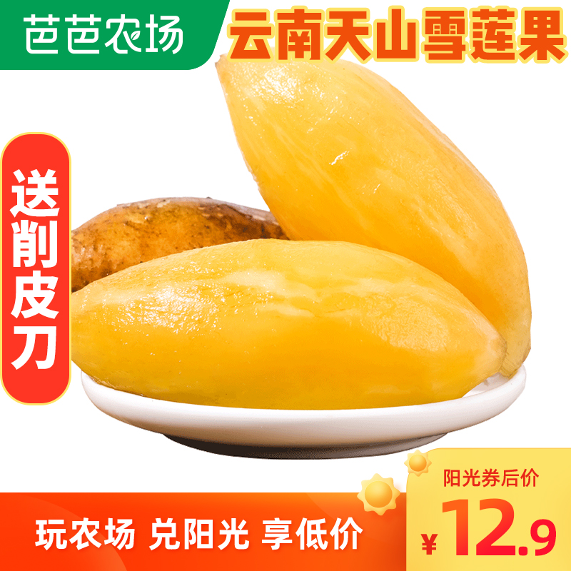 【防摔包装】云南雪莲果大果新鲜水果10斤天山雪莲果当季包邮整箱