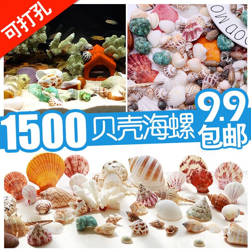 天然贝壳海螺海星ins风格装饰品卷贝鱼寄居蟹替换壳鱼缸造景珊瑚