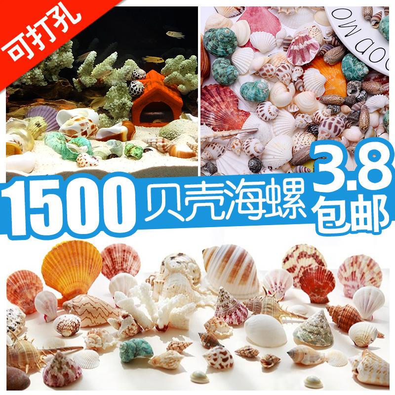天然贝壳海螺海星打孔手工diy装饰品卷贝鱼寄居蟹壳鱼缸造景珊瑚