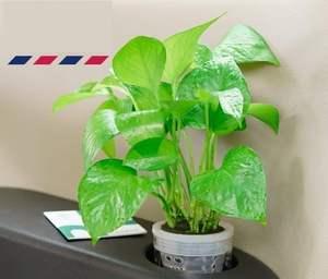 车载绿植小盆栽 车内真花草 植物净化空气汽车摆件盆景  绿萝水培