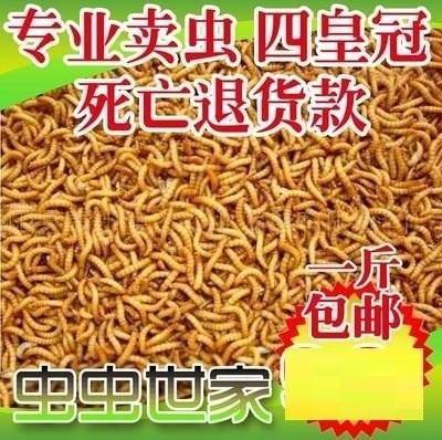 虫子活的喂鸟喂鸡虫子小鸟吃的虫子黄粉虫宠物饲料画眉-鸡饲料(青蓝家居专营店仅售12.01元)