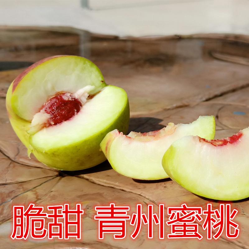 青州蜜桃 脆甜离核脆桃小毛桃 优选特级大果 山东青州新鲜小蜜桃