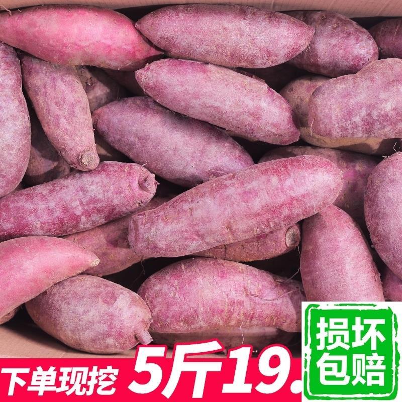 紫薯 新鲜 5斤包邮农家自种大红薯紫山芋蜜薯新鲜蔬菜小地瓜番薯