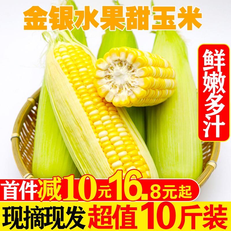 水果玉米新鲜甜玉米棒农家粗粮早餐即食带箱10斤装当季现摘现发