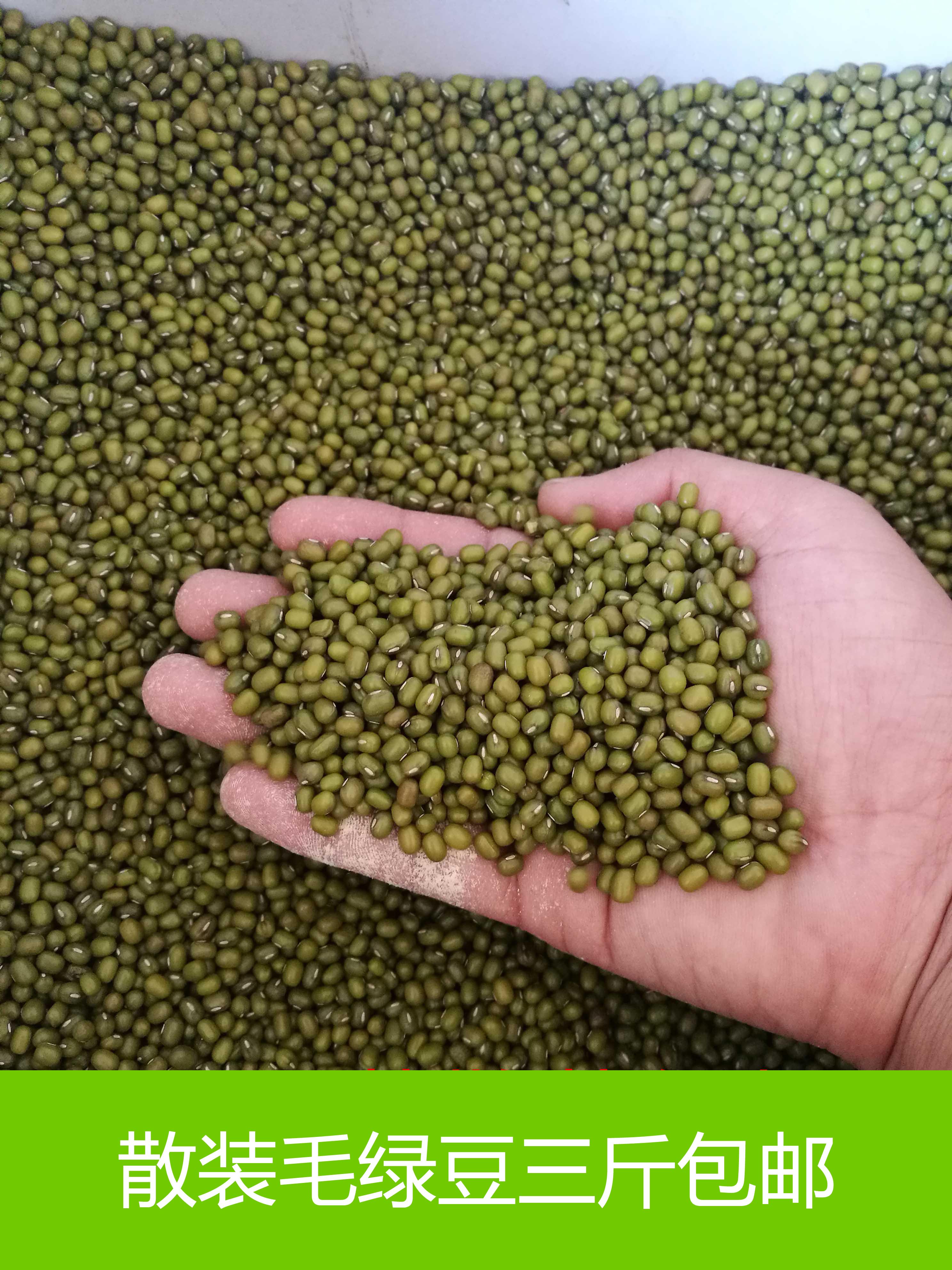 山东泗水 绿豆散装 农家自产自销毛绿豆 散装三斤包11-17新券