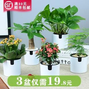 发财树绿萝室内花卉吊兰办公室桌面小绿植茉莉花盆栽水培多肉植物