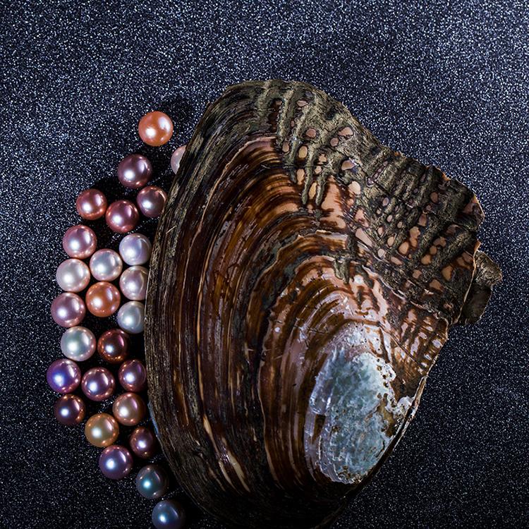 【12楼 爱迪生珍珠】单珠淡水珍珠直播开蚌活体蚌散珠打孔diy紫色