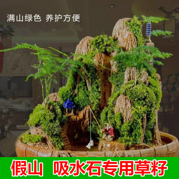Four seasons rockery seed for bonsai pearl grass seed for absorbing water stone