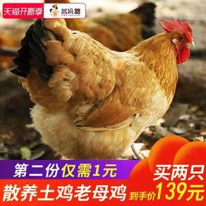 领10元券购买然妈正宗散养土鸡老母鸡活整鸡农家走地公鸡月子鸡草笨鸡乌鸡新鲜