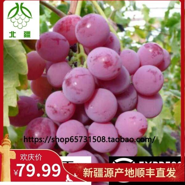 新疆八十三团83团特产红提新鲜网红葡萄儿童孕妇水果吐鲁3斤包邮