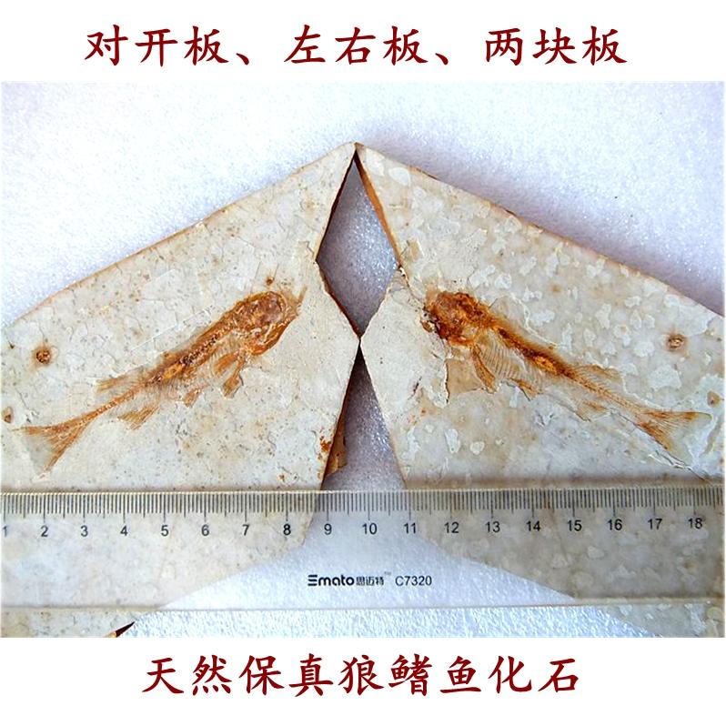 Ископаемые Артикул 613033421236