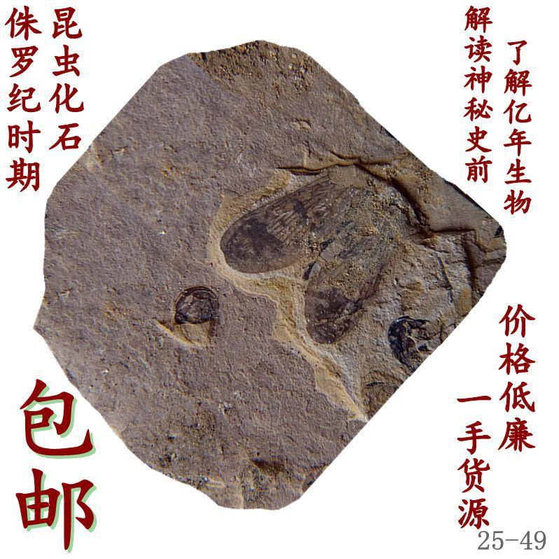 Ископаемые Артикул 612112516597