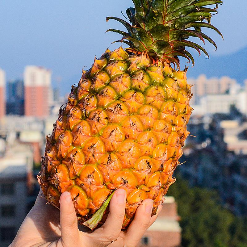 云南金钻凤梨新鲜水果包邮当季大菠萝牛奶手撕树上熟整箱6斤净重5