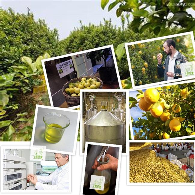 本品のレモンのエッセンシャルオイルはフランスの輸入の一方的な味は清新で、人の香ばしい香りの顔の全身マッサージ
