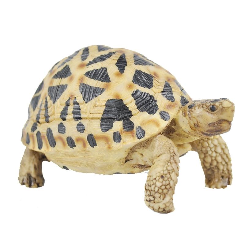 陆龟印度星龟豹龟树脂模型陆龟高仿真模型摆件装饰陆龟模形非活体