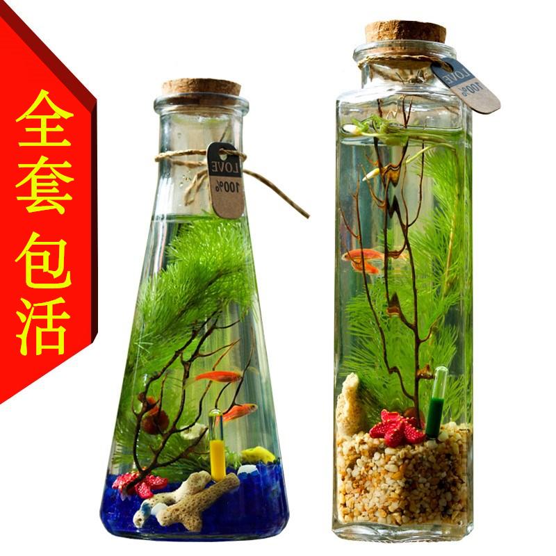 Рыбы Артикул 593897456841