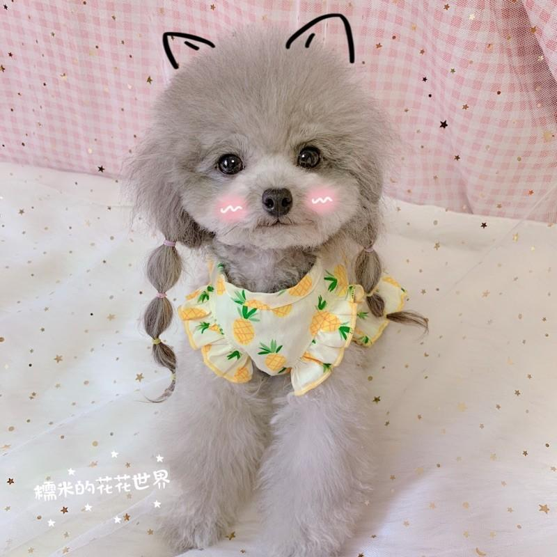 Pet dog clothes Teddy fruit watermelon cherry pineapple lovely flying sleeve baby skirt spring and autumn summer