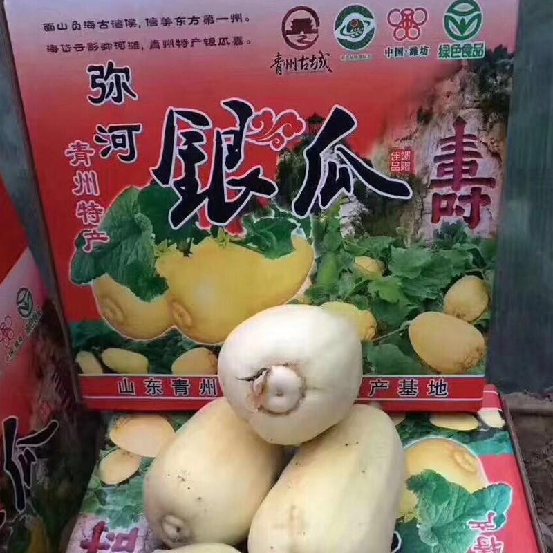 山东青州特产弥河银瓜甜瓜白瓜大关营银瓜非羊角蜜特价五斤包邮