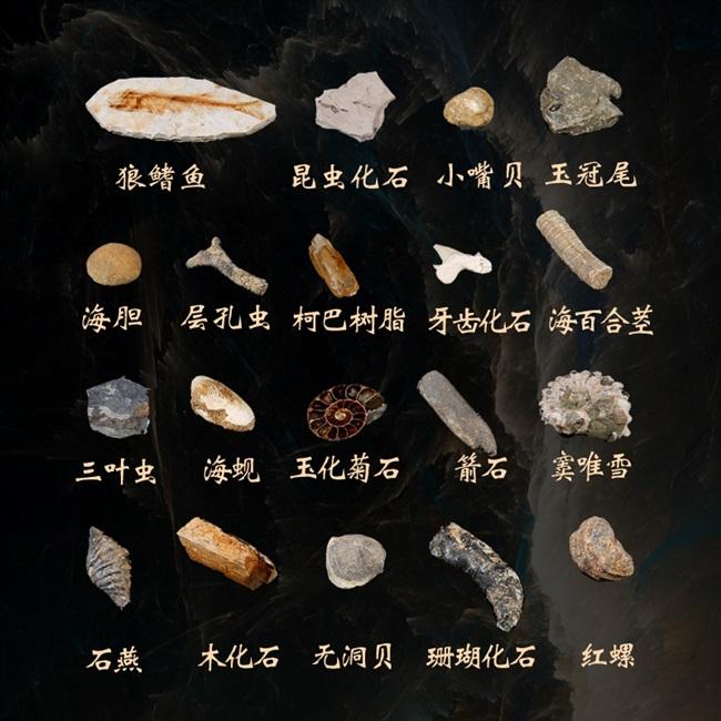 Ископаемые Артикул 643536964755