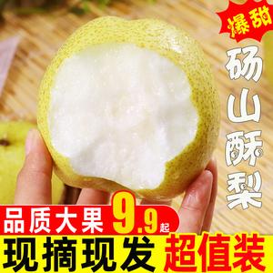 梨子新鮮水果安徽碭山酥梨整箱10應季皇冠香雪梨脆甜梨斤包郵當季