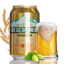 啤酒整箱24瓶哈尔滨金麦啤酒330mL*24/6听试饮易拉罐装2.5度8°P