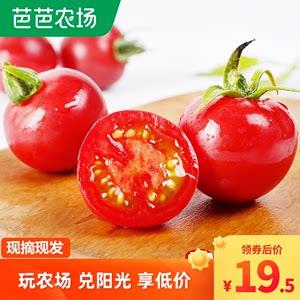 山东西红柿新鲜小番茄自然熟圣女果樱桃水果千生吃沙瓤禧蔬菜5斤