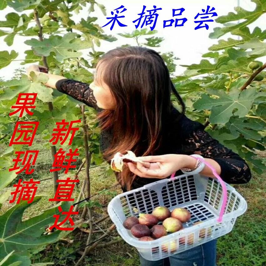 11月06日最新优惠【积分领树】农家果园新鲜水果波姬5