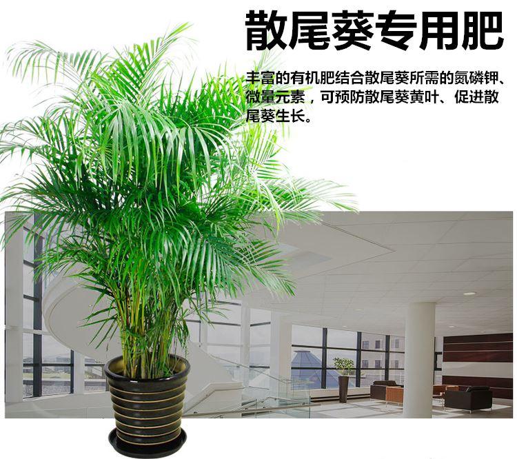 新品散尾葵肥料专用肥海南椰子树富贵椰子夏威夷树袖珍椰子有机肥