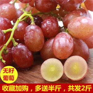 富鲁特无籽葡萄 无核 新鲜甜红提山东特产当季水果孕妇非夏黑提子