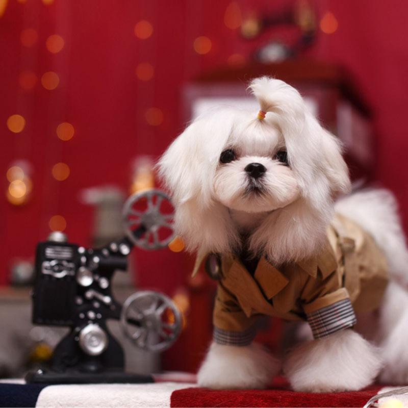 Thehobbitpet pet dog windbreaker coat clothing fashion brand Yorkshire teddy bear VIP Clothing promotion