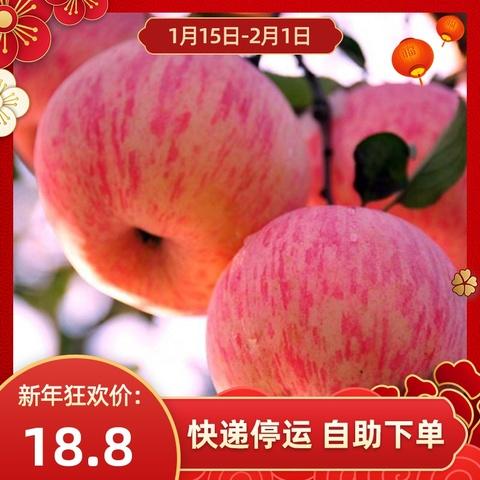 红富士苹果10斤包邮脆甜多汁水果当季促销5斤装现摘现发新鲜应季