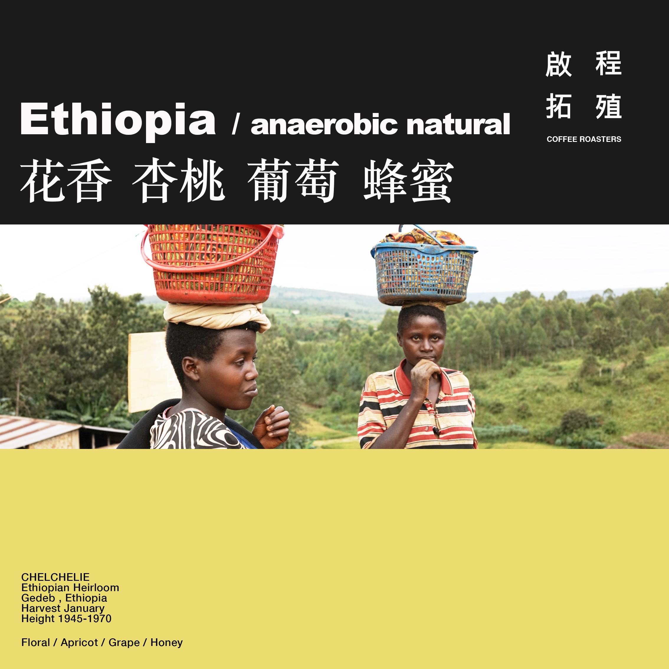 【Terraform】杏桃葡萄 2020新产季埃塞俄比亚96h厌氧日晒咖啡豆