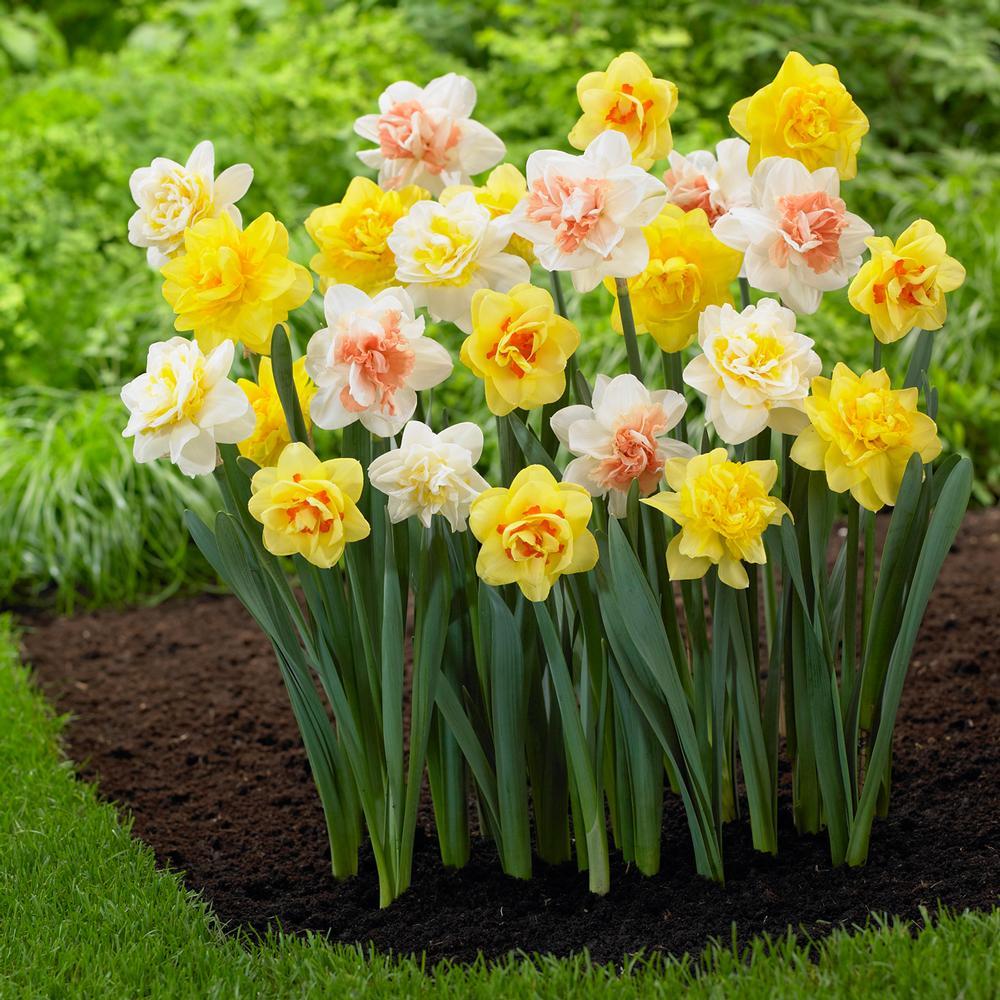Цветочные луковицы Артикул 597264481890