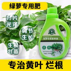 绿萝营养液专用肥绿箩植物叶子发黄肥料室内水培通用花肥水养盆栽