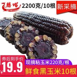 东北黑粘玉米棒2200克10根糯玉米新鲜甜嫩大穗苞米穗真空鲜食包邮