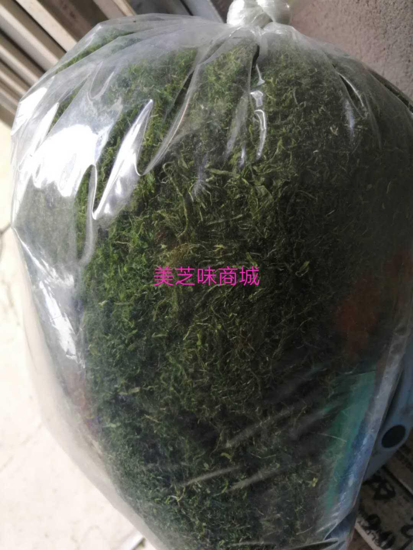 宁波特产优质野生海苔条象山浒苔菜条天然鲜香 新鲜250g 买四送一