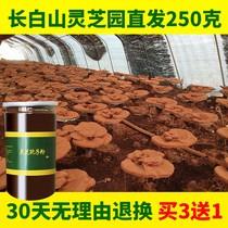 【灵芝基地】250克买3送1 灵芝孢子粉长白山灵芝粉林芝正品袍子粉