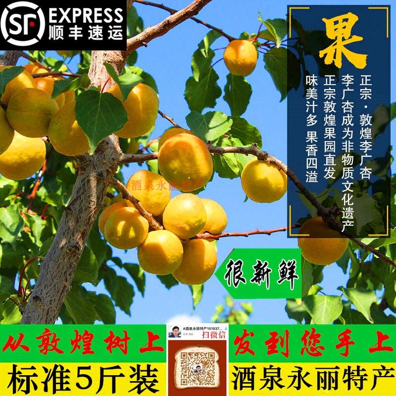 杏子水果正宗敦煌李广杏农家现摘现发新鲜5斤应季水果甜杏现货