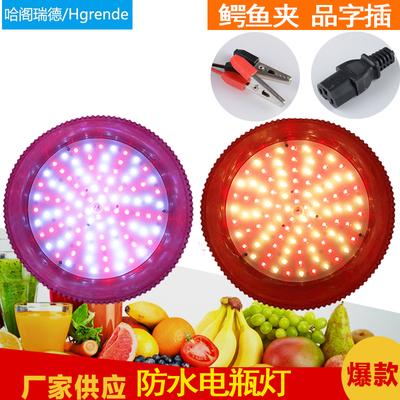 12VLED灯泡48v夜市充电摆地摊灯 低压电瓶水果生鲜灯猪肉灯熟食灯