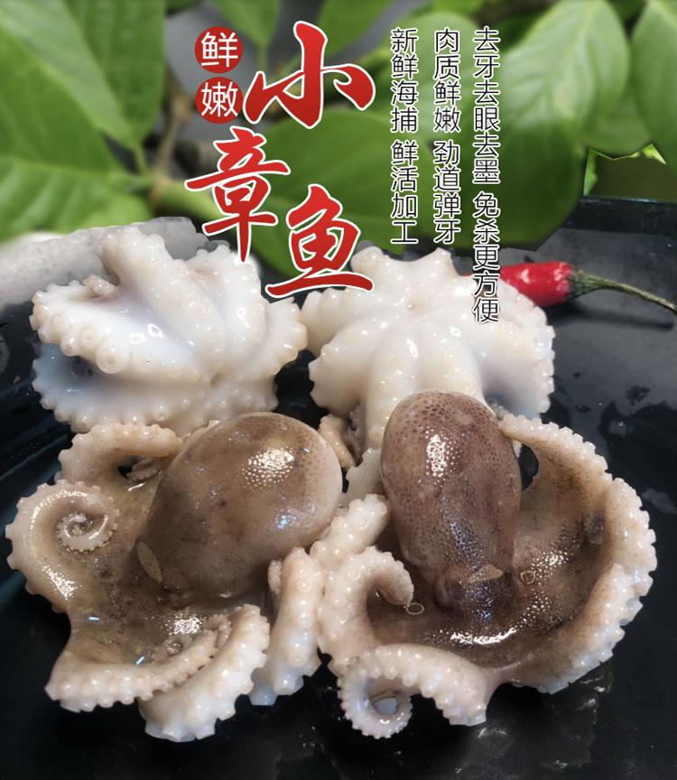 迷你八爪鱼鲜活冷冻小章鱼野生海鲜
